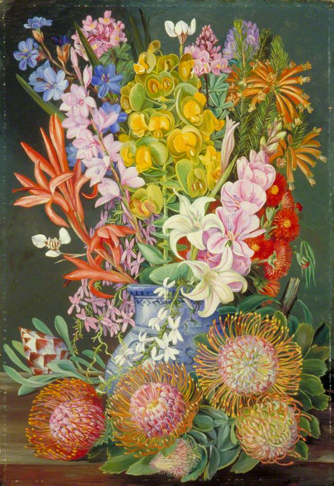 Arts Everyday Living: Through a Botanical Artist's Eyes---Wildflowers of South Africa