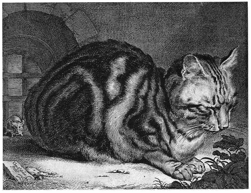 Cornelis Visscher, Cat Sleeping, 1657, engraving, prints in several museum collections