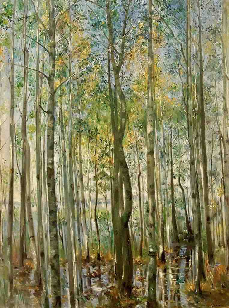 Arts Everyday Living: Into the Heart of the Forest---The Flooding Trees